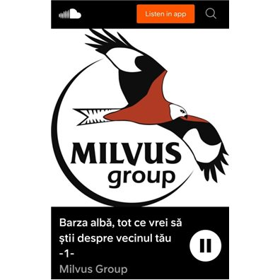 Podcast - Barza alba