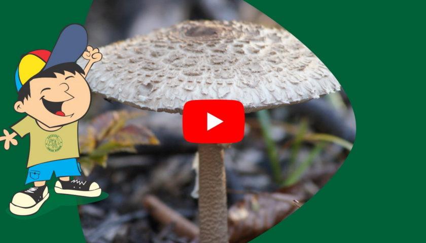 <span>Lumea ciupercilor</span>