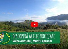 Descoperă ariile protejate de pe Valea Arieșului (Video)