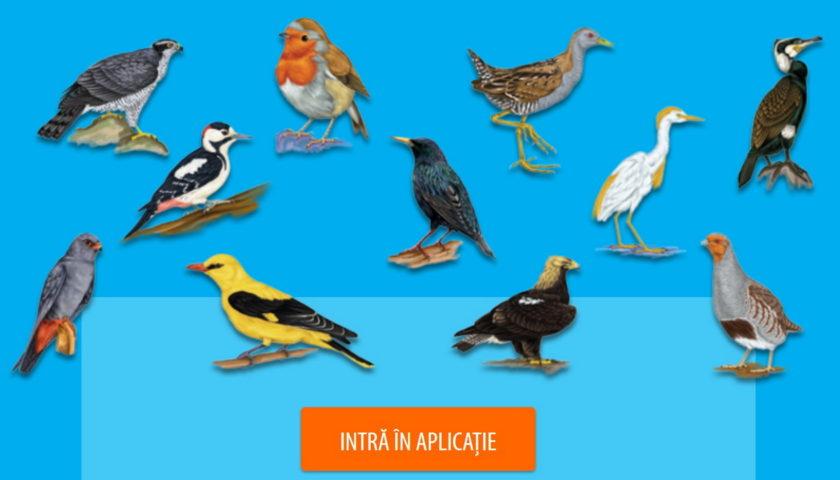 <span>Atlas al speciilor de pasari de interes comunitar din Romania</span>