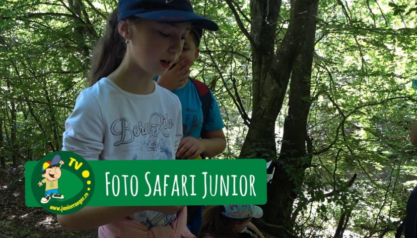 <span>Foto Safari Junior (video)</span>