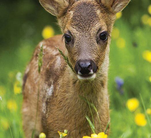 <span>Determinator plante si animale – Editura Casa</span>