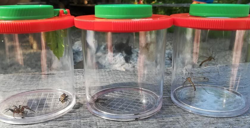 <span>Observarea insectelor</span>